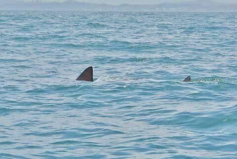 サメ〜!!!!!!